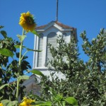 Sunflower and Carriage House