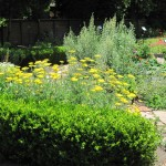 Medicinal & Culinary Garden