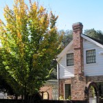 House and Autumn Tree