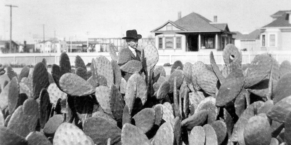 Luther Burbank in Spineless Cactus Bed