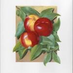 Fruit Print - Nectarine